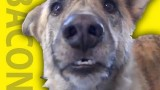 Funny Talking Dog Video