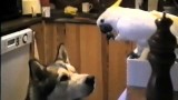 Bird feeds Dog