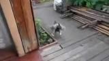 Doggie chores