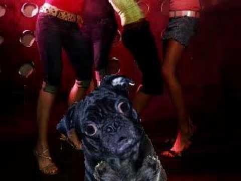 Funny Pug Woop Rap