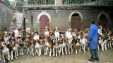 120 Hunting Dogs fed at a single setting in Cheverny, France