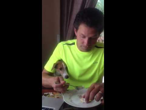 Breakfast with Paul and the Dogs – Who's Hungry Now?