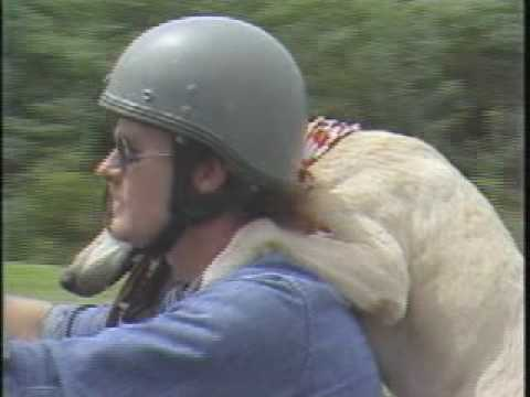 "Dog named ""Dog"" ""seating"" a  motorcycle(video)"