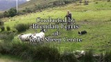 Dogs Herding Sheep in Ireland( video)