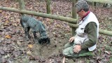 Dogs Sniff out Truffles in Piedmont Italy(video)