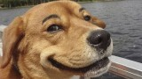 A Compilation of Dogs With Eyebrows(video)