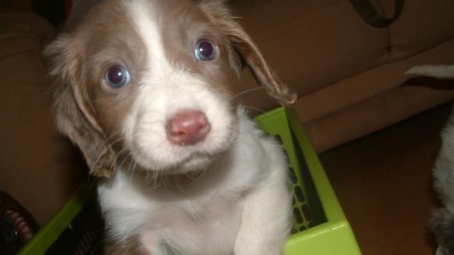 This is my Puppy Karu