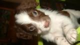 My Puppy Timmy
