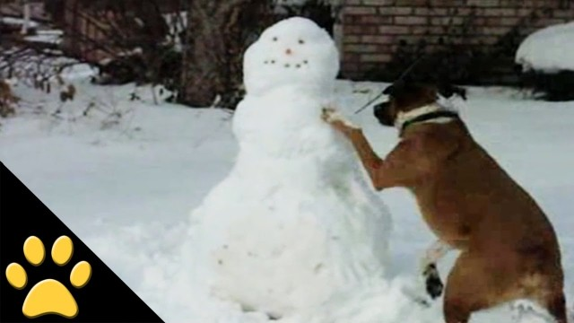 Dogs in Winter,Sleds & Snowmen(video)